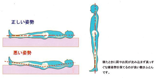 正しい寝姿勢2.jpg