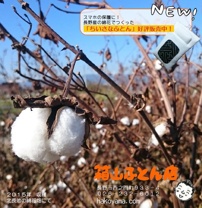 長野産の綿でつくった話題のスマホ布団